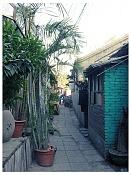 Pekin-img_1804-copy.jpg
