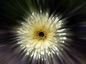 Flora-marga-mareada-2.jpg
