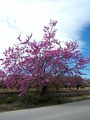 Flora-vinaros-24.jpg