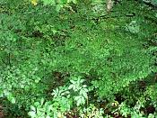 Fotos Naturaleza-plitvicka-jezera-6.jpg