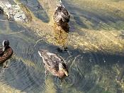 Fotos Naturaleza-plitvicka-jezera-13.jpg