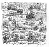 Dibujo artistico - El Pastelista-54-hierbas.jpg