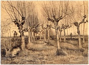 acerca de Holanda   -vincent-van-gogh-1853-1890-pollard-birches.jpg