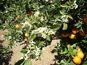 MOLESKINE_para amantes de las Moleskine-naranjas_enan-20013.jpg