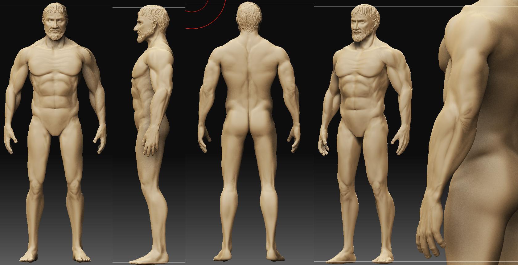 Contemporáneo Anatomía De Los Hombres Elaboración - Anatomía de Las ...