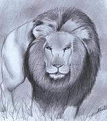 Dibujos rapidos , Bocetos  y apuntes  en papel -leoncillo.jpg