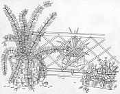 Dibujo artistico - El Pastelista-garden.jpg