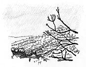 Dibujo artistico - El Pastelista-80-ramas.jpg