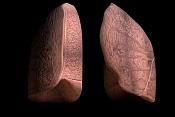 medico  en    aprietos:texturas para  anatomia-pulmones.jpg