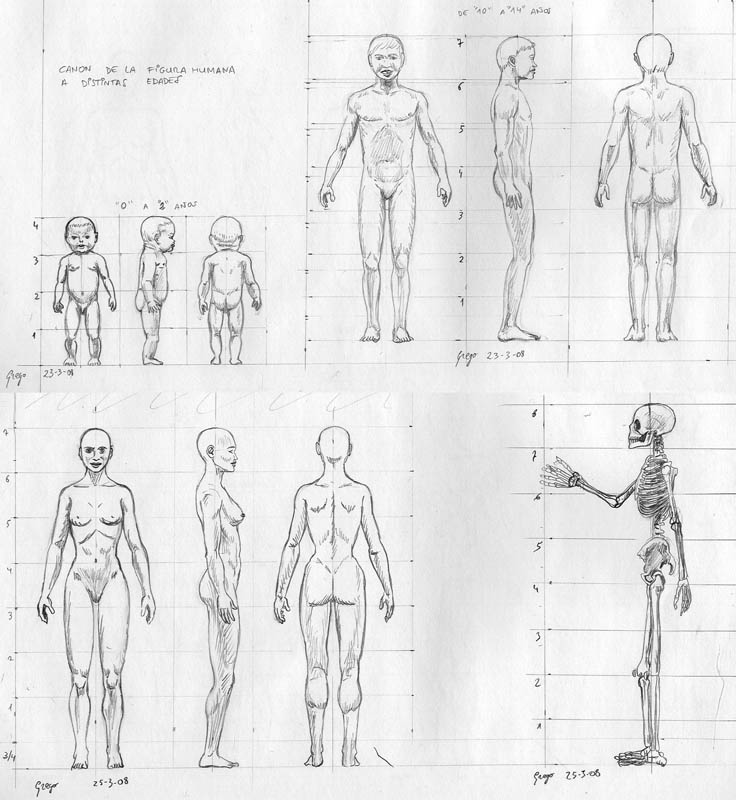 Bonito Mujer Boceto Anatomía Friso - Anatomía de Las Imágenesdel ...