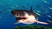tiburon-tiburon-escena-wip-textura-modif.jpg