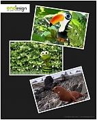 Wild Snapshots -collage.jpg