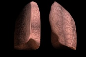 primeros modelados-pulmones.jpg