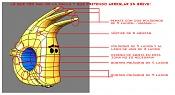DC PROJECT_Los personajes-fly_correciones.jpg