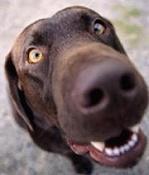 Quedada Madrileña-perros-0020-nariz-perro.jpg