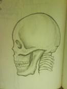 Dibujos rapidos , Bocetos  y apuntes  en papel -craneo_m0l.jpg