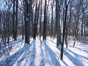 Integracion a fotografia-treeshadows0303.jpg