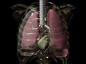 ejemplo de lo que quiero en mallas medicas-neumotorax_1ergrado_nuevo_copia.jpg