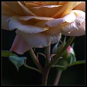 Con Dos Cojones   mis fotos -_mg_5312_crop.jpg