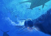 Ungravity Project-the-whales-ride-final.jpg