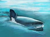 kouprey dibus-shark-02.jpg