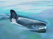 kouprey dibus-shark-03.jpg
