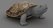 Tortuga varias pruebas-tortugacapazazonprueba.jpg