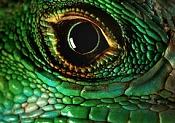 Cómo crear ojos y párpados-ojo-reptil.jpg