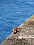 Castillo de san Felipe y alrededores-perro.jpg