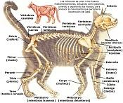 Pregunta de Biped-esqueleto.jpg