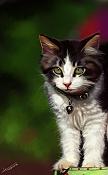 Un Minino-gato2.jpg
