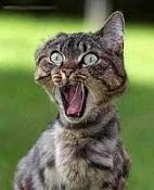 Mister 3dpoder-gato_asustado.jpg