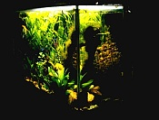 Mi otra gran pasion-acuariocompleto.jpg