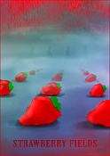 Porfolio Vasilis-Kun-strawberry-fields.jpg