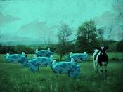 Restricted area-vacas.jpg