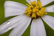 Flora-flor.jpg