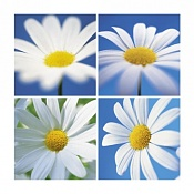 Flora-009-150.jpg