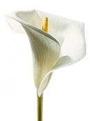Flora-009-157.jpg