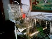 Gatos o perros -animales1.jpg