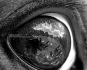 Cómo crear ojos y párpados-horseeyebw.jpg