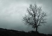 Fotos acortes-galicia-cimg8605-post.jpg
