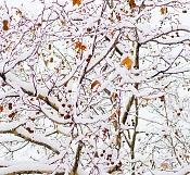 Ha nevado en madrid  -snow_003_lw.jpg