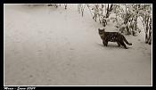 Ha nevado en madrid  -cazador.jpg