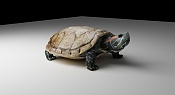 Tortuga varias pruebas-tortuga1-5.jpg