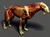 Gato de Dientes de Cimitara, anatomia  Homotherium -esqueleto1.jpg