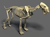 Gato de Dientes de Cimitara, anatomia  Homotherium -esqueleto2.jpg