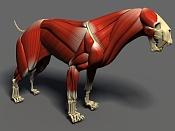 Gato de Dientes de Cimitara, anatomia  Homotherium -esqueleto3.jpg