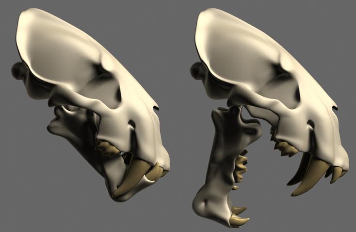 http://www.foro3d.com/attachments/93797d1233849223-gato-dientes-cimitara-anatomia-homotherium-3.jpg