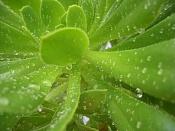 Un dia de lluvia-cimg3157.jpg