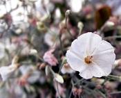 leica y pol-florecillas-133c.jpg